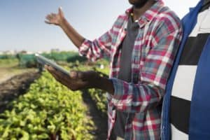 Young African adult consulting tablet with older male in vegetable garden