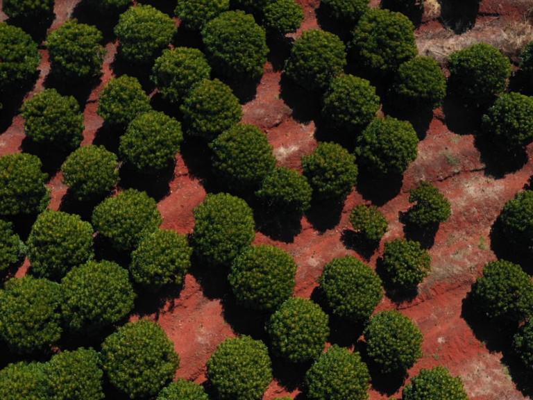 Kemiri Sunan degraded land Flores