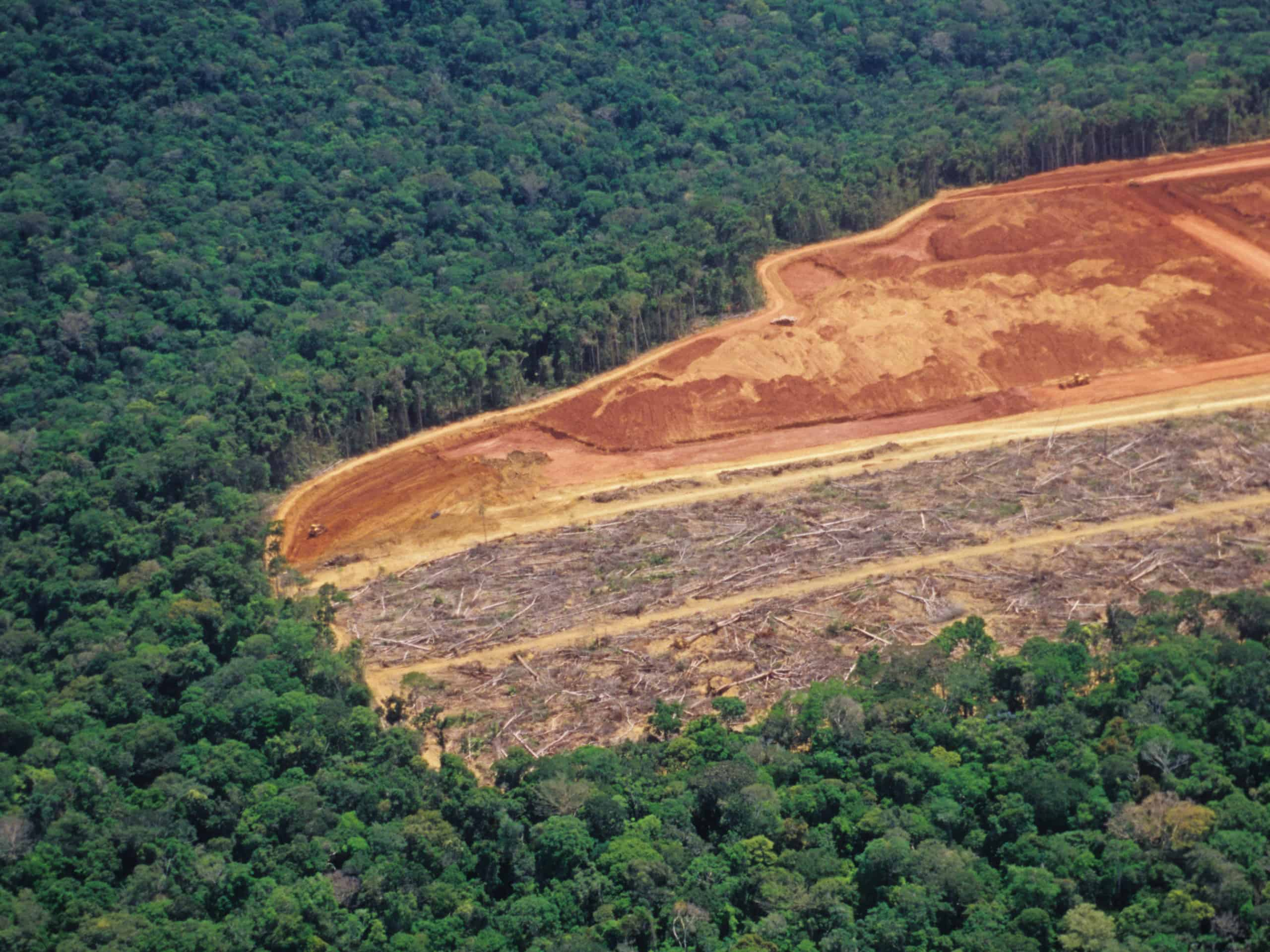 Political alignment through the Amsterdam Declarations Partnership is helping cement Europe's position as a leading example in the global transition to deforestation-free supply chains